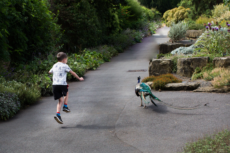boy skipping with a peacock in Kew Gardens in a half a Day in the Life photography session