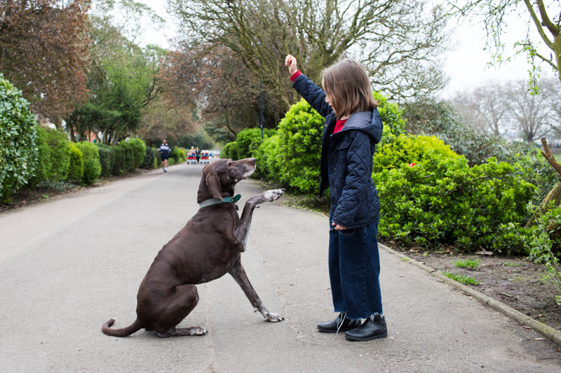 Girl holding up a treat for the dog, who holds it's paw up.