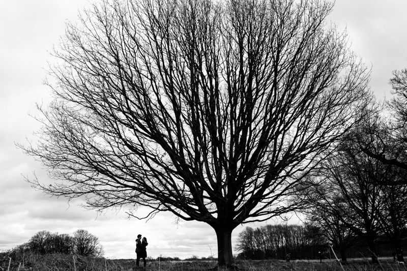 Silhouette of a couple standing under huge tree.